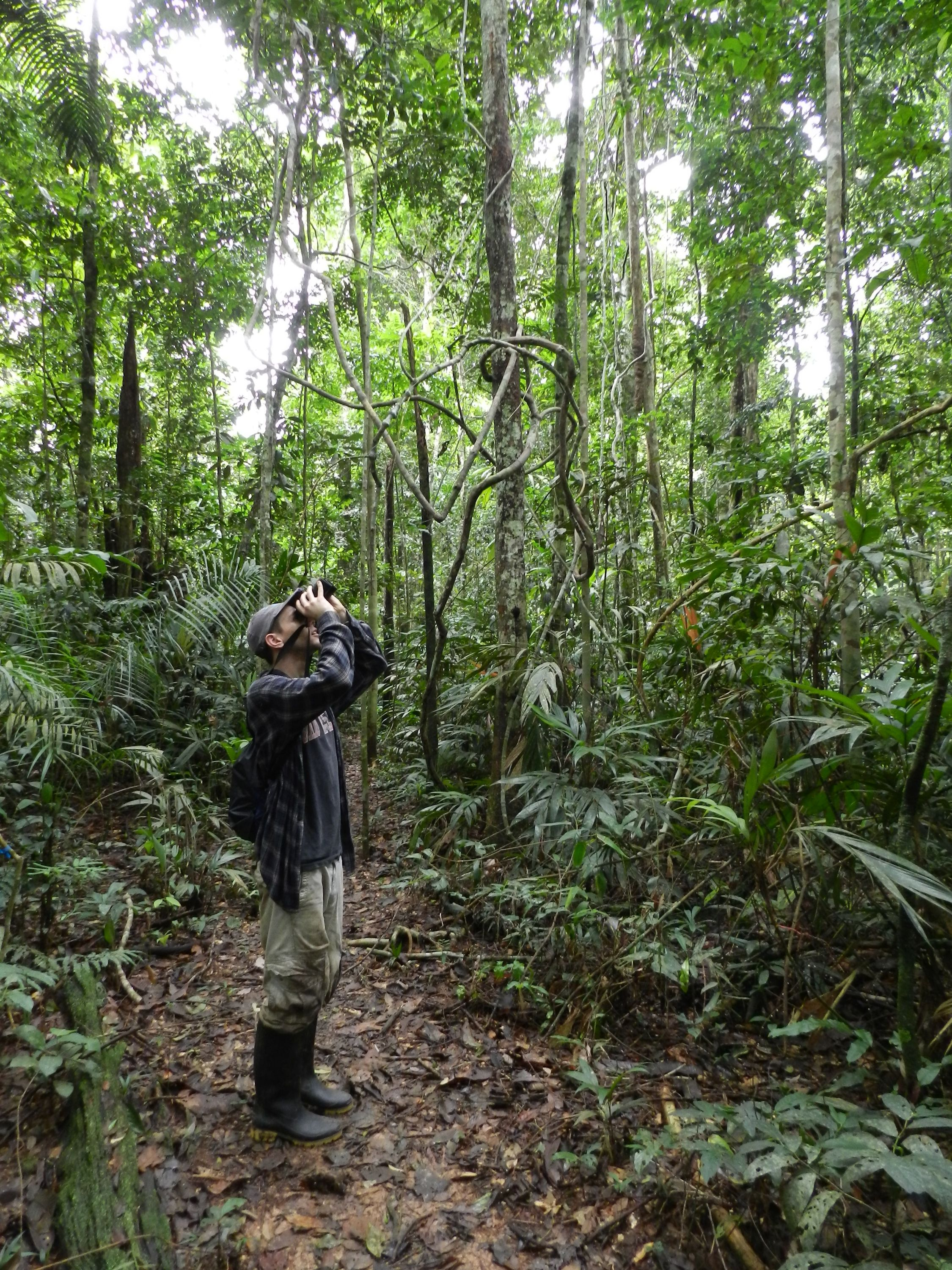 Sean scanning the rain forest canopy from the ground, Madre de Dios, Peru